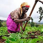 Photos Of Female Farmers Working In Their Farm In Nigeria And Around The World