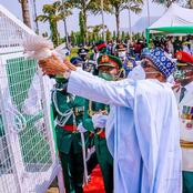 Sarcasm: See 5 Reasons Why President Muhammadu Buhari's Pigeon Might Have Refused to Fly