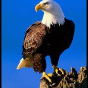 Do you know there are lessons to learn from each animal? Here are 7 successful lessons from an Eagle