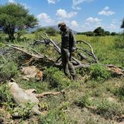 Two lions killed a man at work in South African