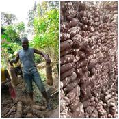 I can feed 10 communities, Igbo farmer boasts