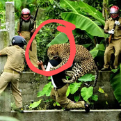 15 Times Wild Animals Were Caught On Camera Attacking People