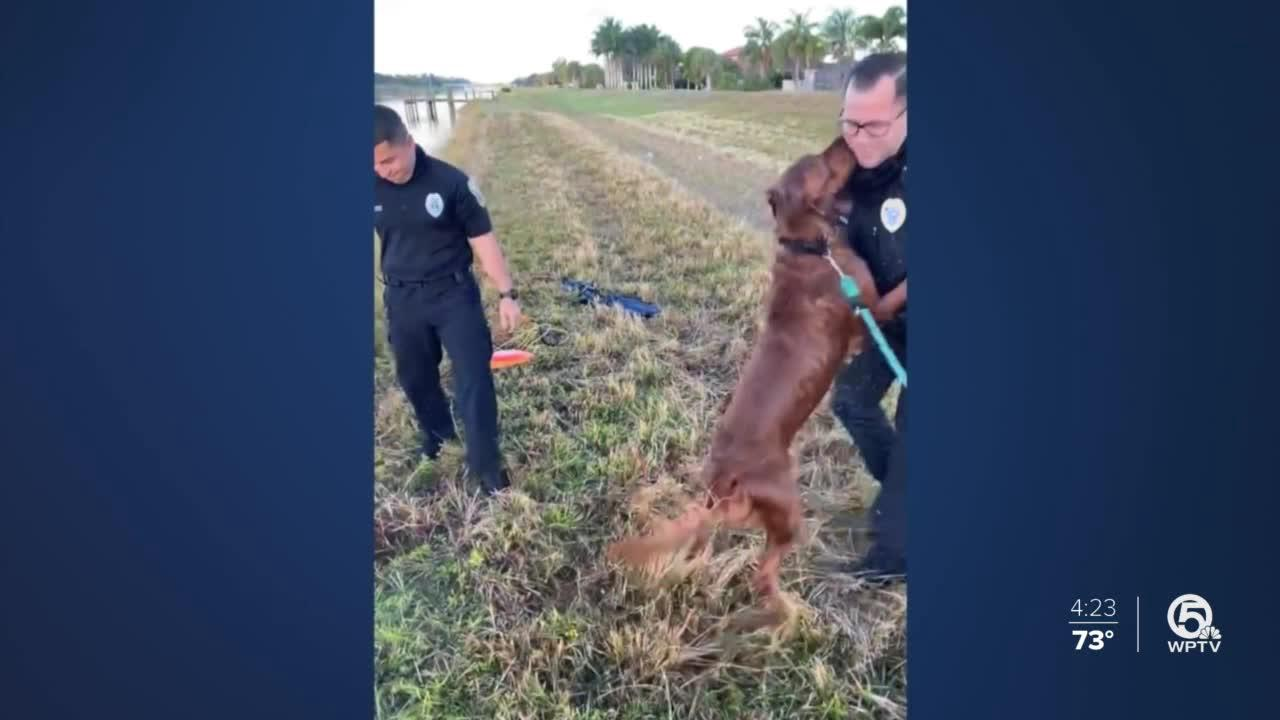 Port St. Lucie police save struggling Golden Retriever from canal