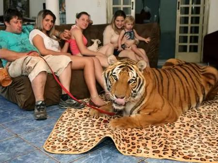 Despite The Fact That Tigers Are Dangerous, This Man Lives With 7 Of Them