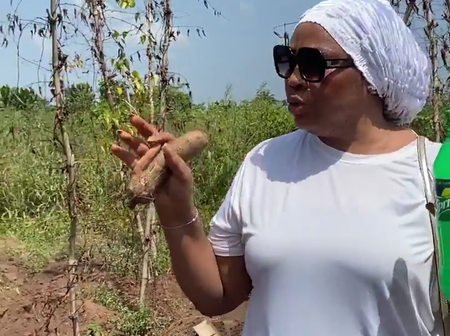 Regina Daniels mother, Rita share photos from her farm as she begins the harvesting of her yam.