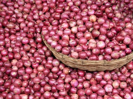 How To Start Onions Business In Nigeria