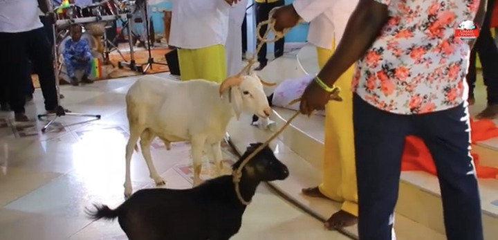 1414f4ee19da03d5a89d373d311024e6?quality=uhq&resize=720 - Prophet Tawiah Reconciles With NPP. Brings Sacrificial Sheep And Goat To Altar To Perform Directions