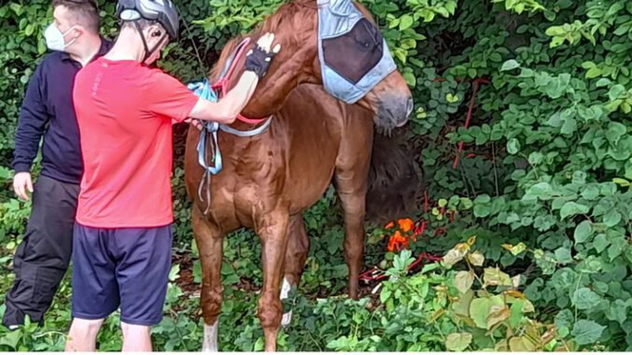 ▷ FW-M: Pferd war allein unterwegs (Aubing/Puchheim)