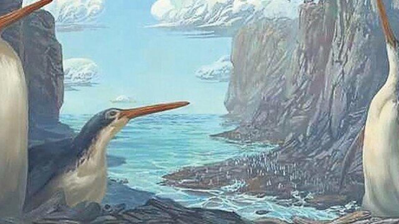 Kinder-Pinguin : Kleine Entdecker machen eine große Entdeckung