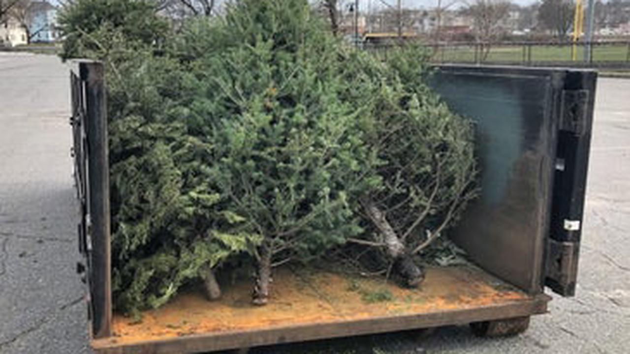 Where To Get Rid Of Christmas Trees In Worcester