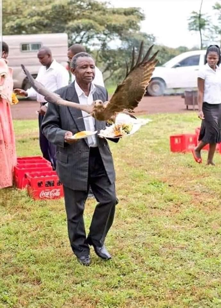 157fa1f50b1be9118523678dbc486d36?quality=uhq&resize=720 - Man Almost Weeped After a Hawk Snatched Meat On His Food At A Wedding Ceremony