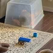Funny Pictures Of What Kids Do At Home