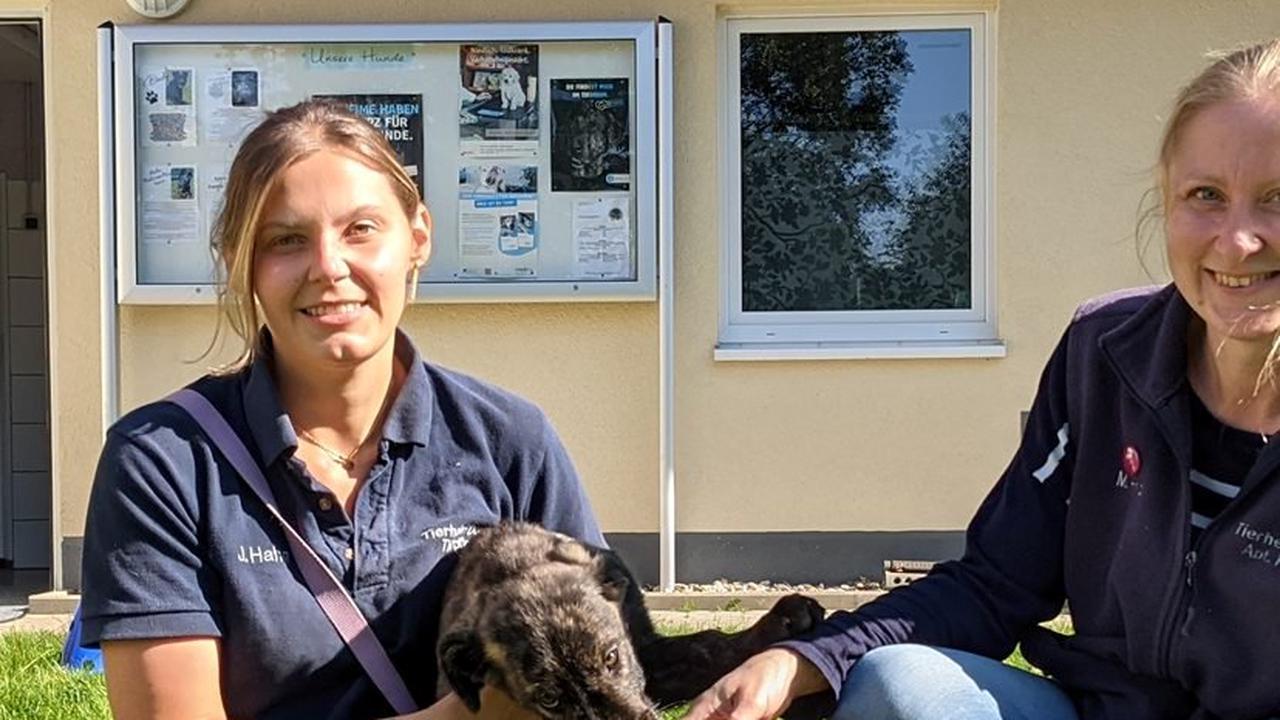 """DZ+ Viele Abgabeanfragen im Tierheim - Familien mit """"Corona-Hunden"""" überfordert"""
