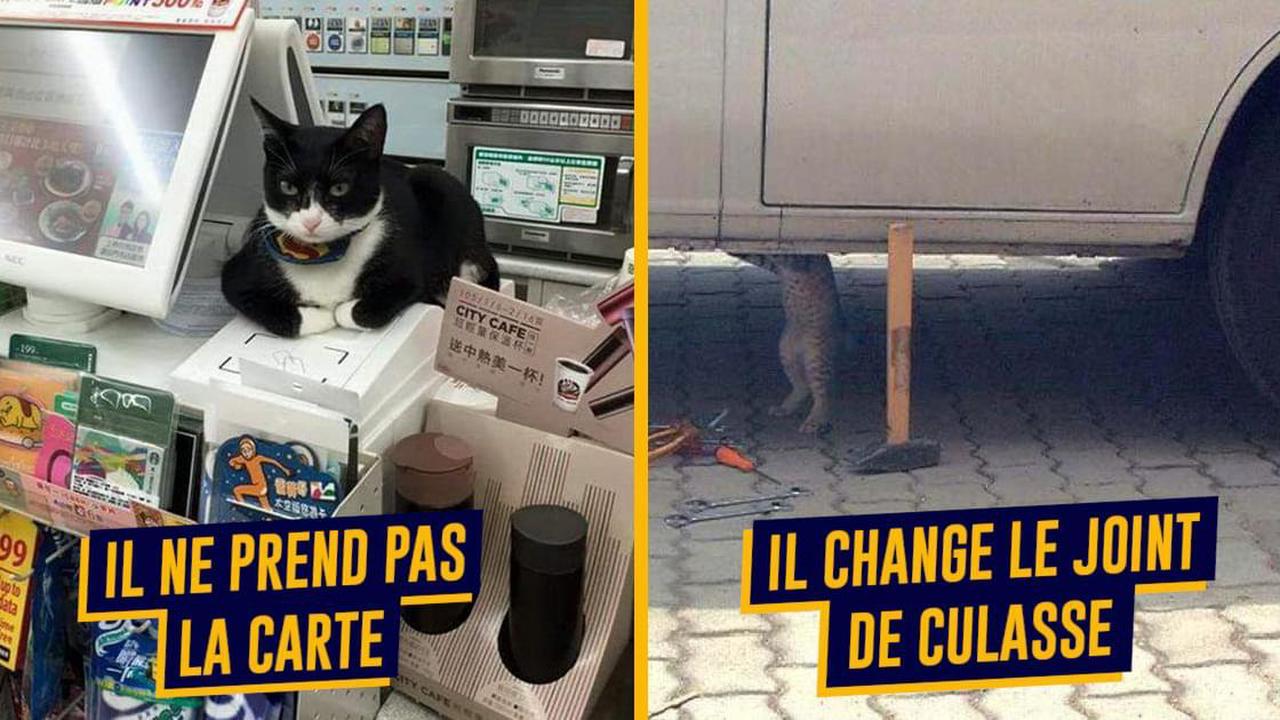 Job de rêve: devenez câlineur.se de chats à temps plein!