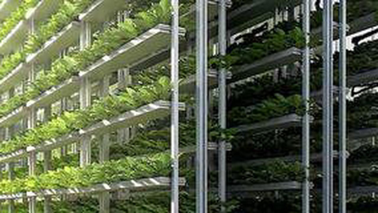 Mit Knowhow aus Bienenfarm: Gemüseanbau in Trockengebieten wird bald einfacher