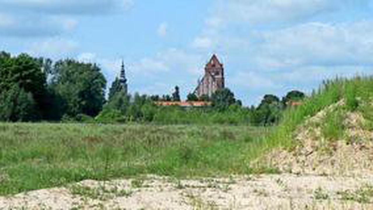 Laubfrosch verhindert Erschließung in Greifswalder Wohngebiet