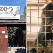 Monkey pulls off the finger of a 5-year-old boy after biting him while he stood near the cage