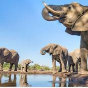 Interesting facts about one of South Africas big 5 animal