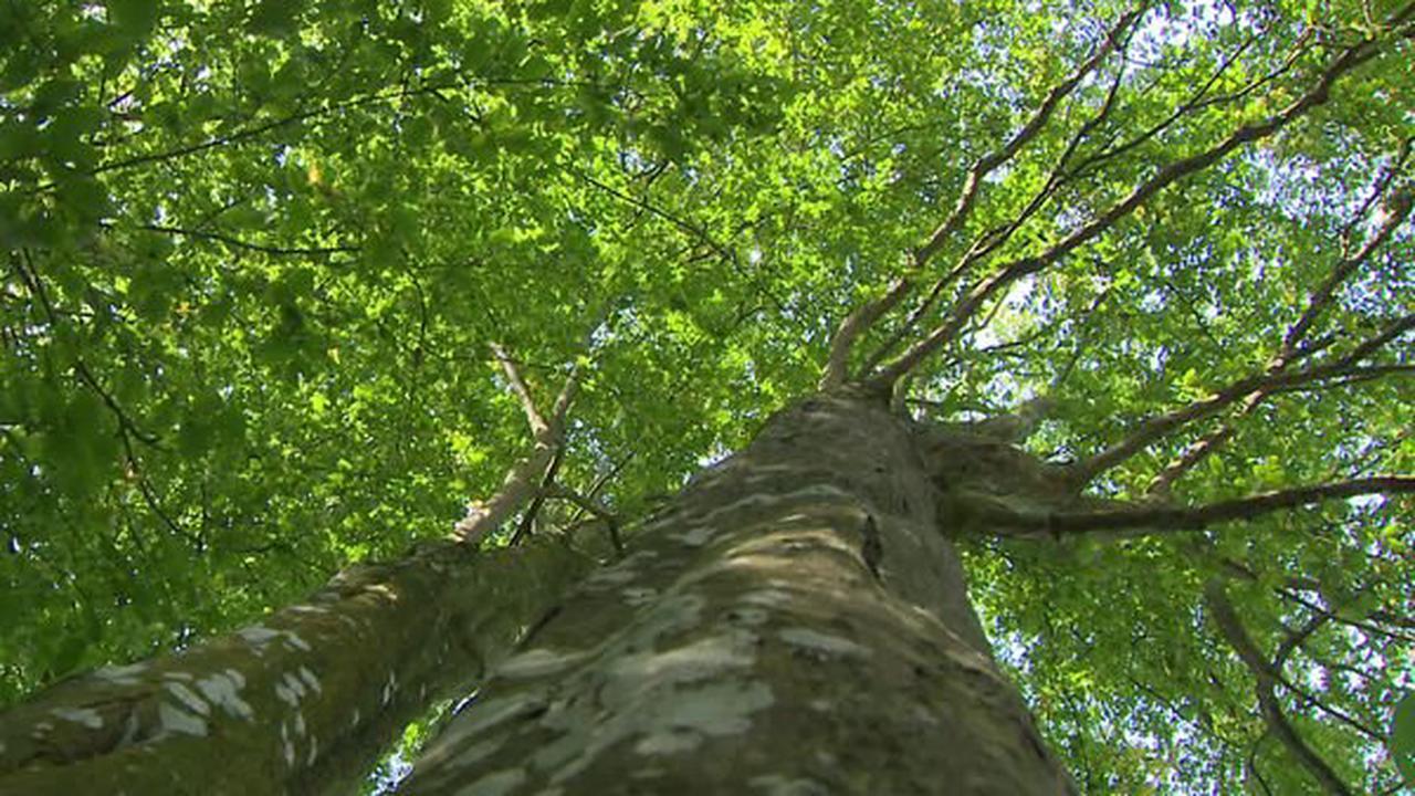 Bientôt un nouveau siège et cap sur la biodiversité pour l'Office national des forêts