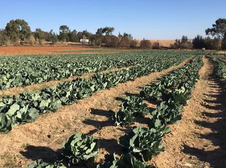 COSATU expresses concerns over the working condition of farm workers