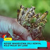 Reactions as Tanzanians are Excited With Kenyans' Innovative Venture in Locusts Business