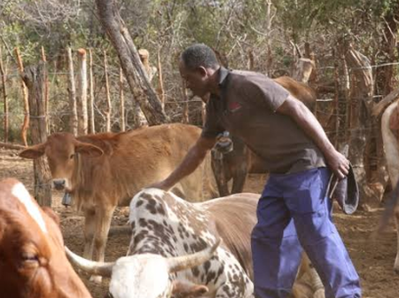 See The Farming System Used For Raring Cattle In The Western Part Of The World (Photos)