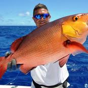 Bohar snapper is New Zealand's popular fish