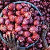 "SEE Why Onions Has Become the ""New Gold"" In Nigeria"