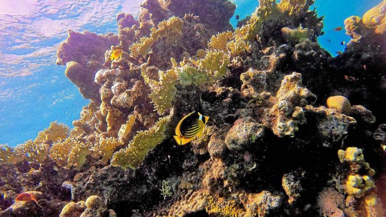 En Israël, un accord pétrolier menace des coraux de la mer Rouge