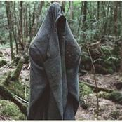 Suicide Forest: See The Japanese Forest Where Hundreds Have Successfully Killed Themselves.