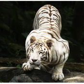 11 most beautiful animals we can't stop staring at - see list