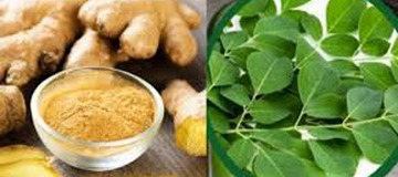 This Combination (Moringa and Ginger) Fights the deadliest diseases.