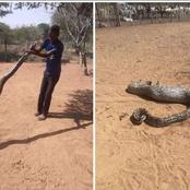 In Shock| SEE what this man did after finding a big snake in his yard- Limpopo