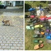 An Animal That Steals People's Shoes Exposed After Stealing More Than 90 Shoes [Photos]
