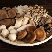 Surprising Health Benefits Of Mushroom