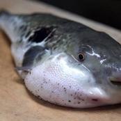 الطب البيطري للمواطنين: احذروا شراء هذا النوع من الأسماك.. وطبيبة تقول: تؤدي للوفاة خلال ساعة واحدة