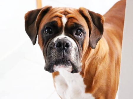 Some beautiful breeds of dogs that can change your mind about keeping a dog as a pet