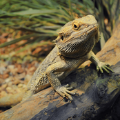Do you Love Pets? Here are 5 Exotic Amimals That are Legal and Cheap to Keep