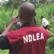 NDLEA Discover Cocaine And Heroin In Prominent Traditional Ruler's Palace