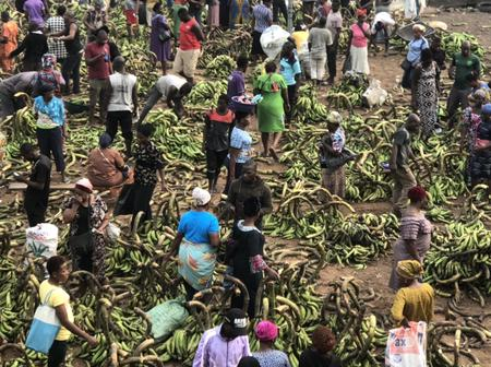 See Pictures Of The Biggest Plantain Market In Isolo