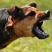 4 Proven Steps To Survive a Dog Attack