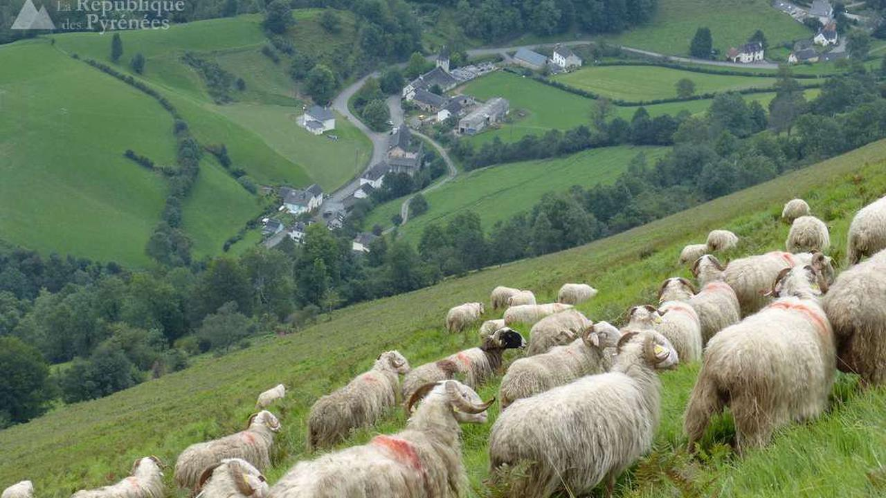 Ours dans les Pyrénées: les associations de défense du pastoralisme en colère