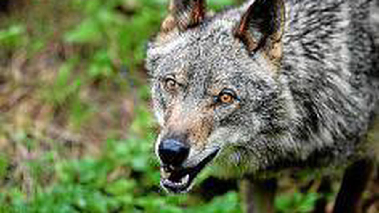 Im TV-Tipp: Wolfsland Spanien