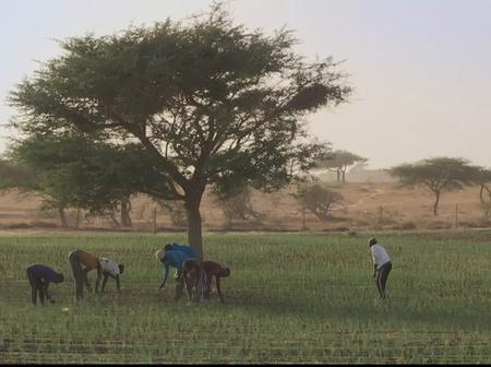 Sénégal : une téléréalité pour envoyer les jeunes dans les champs