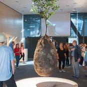 Should this be allowed in Africa? Burial pods that turns bodies into tree, see how it works.