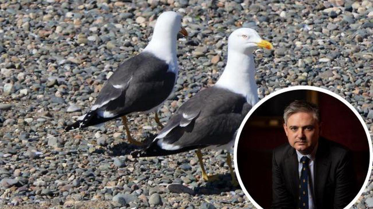 'Problem persists' - Seagull issue continues with warnings over bird abuse