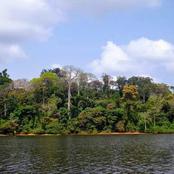 Le parc nationale de Taï : une merveille de la nature