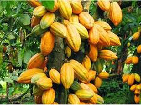 Les différents prix du cacao depuis 2001