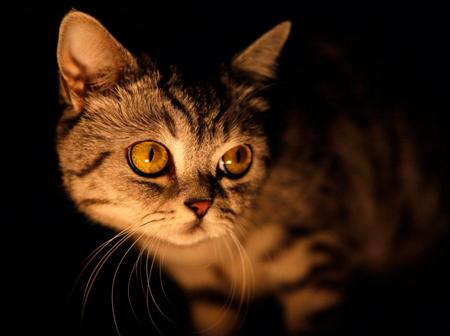 How Come Cats Are Able To See At Night? - Here Is How.