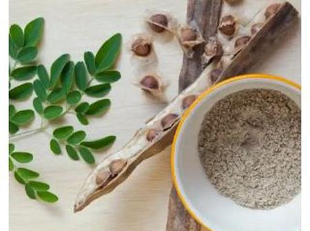 Do you know Moringa plant has amazing health benefits? Check it out